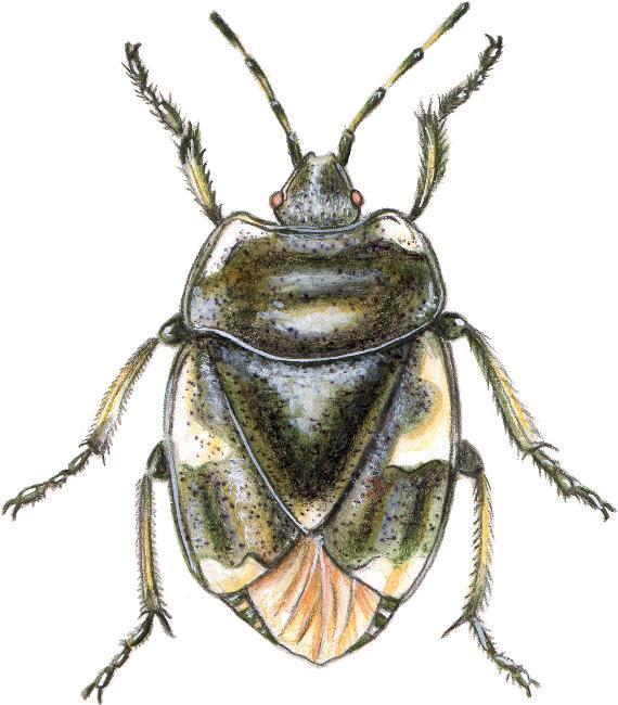 insectes. Black Bedroom Furniture Sets. Home Design Ideas